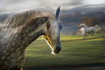 Artistic Photograph - Curiosity by Milan Malovrh