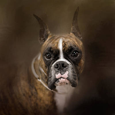 Curious Boxer Print by Jai Johnson