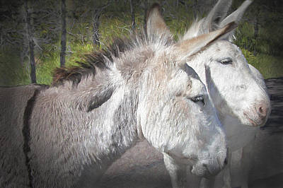 Donkey Mixed Media - Curious Burros - Custer State National Park by Steve Ohlsen