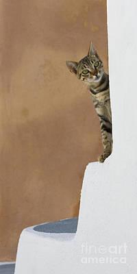 Gray Tabby Photograph - Curious Cat by Jean-Louis Klein & Marie-Luce Hubert