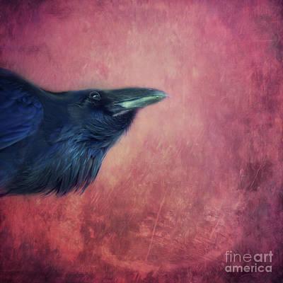 Raven Photograph - Curiosity by Priska Wettstein
