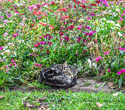 Curled Up Kitten Surrounded By Flowers Print by Liesl Marelli
