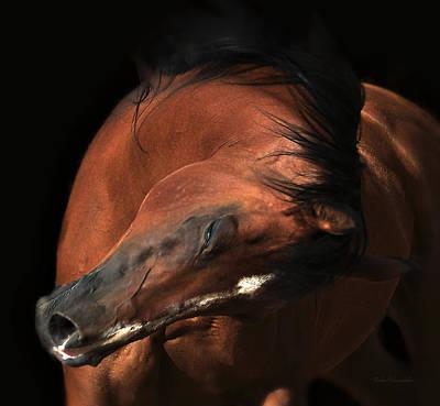 Horses Photograph - Curtsy by Michael Hamilton