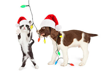 Cute Kitten And Puppy Playing With Christmas Lights Print by Susan Schmitz