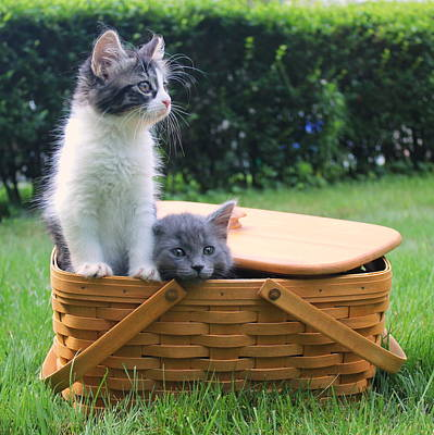 Cute Kittens Escaping From Basket Print by Anita Hiltz