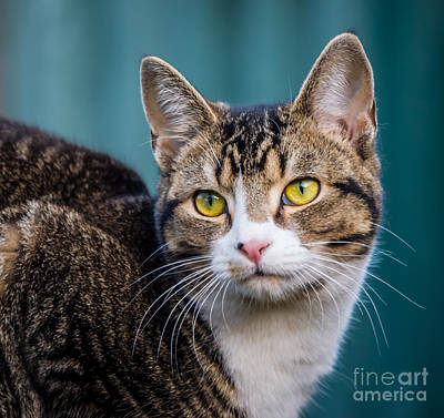 Elegant Cat Photograph - Cute Little Poser by F Helm