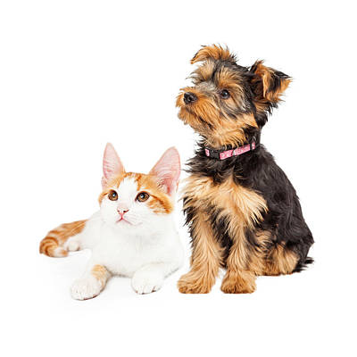 Cute Puppy And Kitten Sitting To Side  Print by Susan  Schmitz