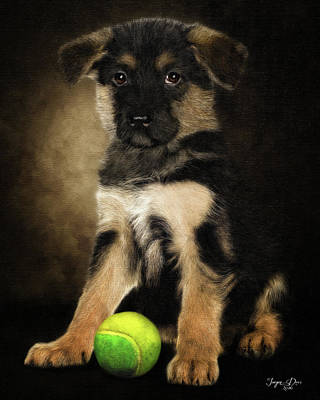 Cute Puppy Original by Jurgen Doelle