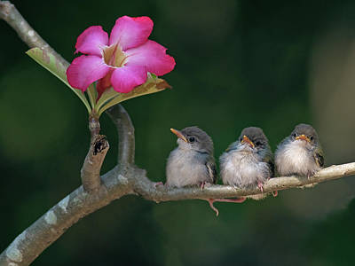 Pink Flower Branch Photograph - Cute Small Birds by Photowork by Sijanto