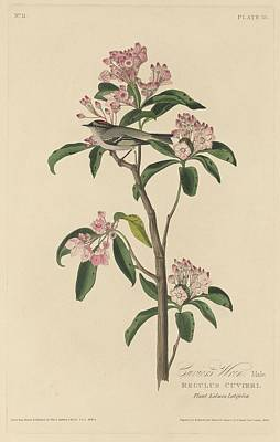 Cuvier's Wren Print by John James Audubon