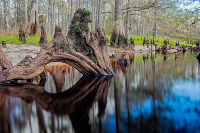 Fisheating Creek Photograph - Cypress Knee In Fisheating Creek by Andres Leon