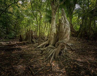 Cypress Knees Print by Bill Martin