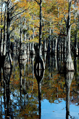 Photograph - Cypress Reflections 2 by David Weeks