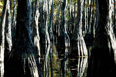 Photograph - Cypress Reflections 3 by David Weeks