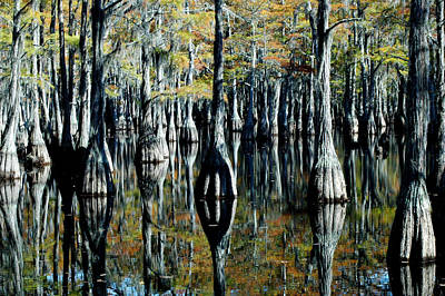 Photograph - Cypress Reflections by David Weeks