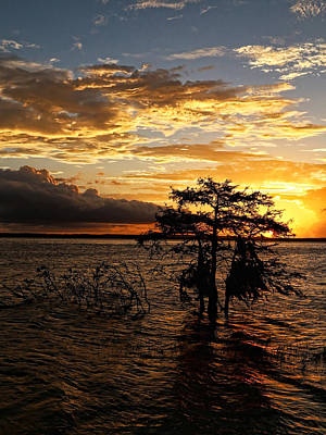 Cypress Sunset Print by Judy Vincent