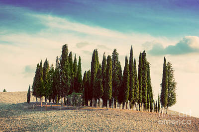 Hill Photograph - Cypress Trees On The Field In Tuscany by Michal Bednarek