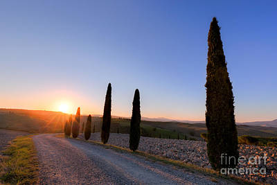 Ground Photograph - Cypress Trees Road In Tuscany, Italy At Sunrise. Val D'orcia by Michal Bednarek
