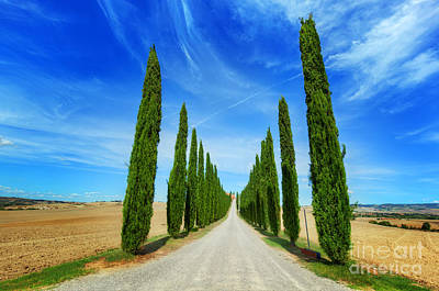 Rural Photograph - Cypress Trees Road In Tuscany, Italy by Michal Bednarek