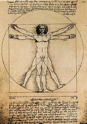 Of Artist Photograph - Da Vinci Rule Of Proportions by Science Source