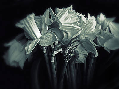 Daffodils Digital Art - Daffodil Duotone by Jessica Jenney