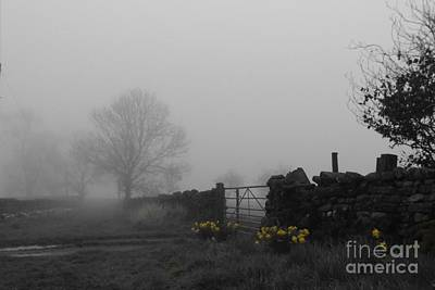 Narzisse Photograph - Daffodils At Dawn by Justin Farrimond