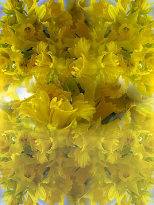 Daffodils Spring 2015 Print by Tina M Wenger