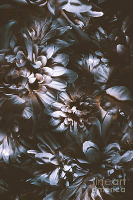 Flower Design Photograph - Dahlia Abstraction by Jorgo Photography - Wall Art Gallery