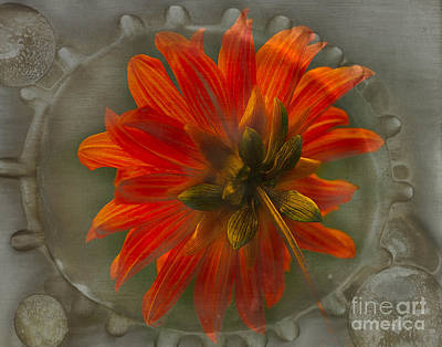 Flypaper Textures Photograph - Dahlia 'bishop Of Llandaff' by Ann Jacobson