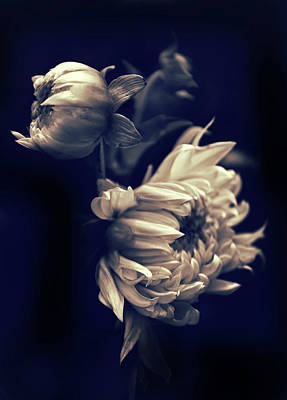 Graceful Digital Art - Dahlia Duet by Jessica Jenney