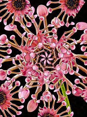 Dahlia Kaleidoscope By Jean Noren Print by Jean Noren