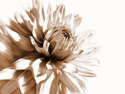 Sepia Flowers Photograph - Dahlia Sepial Flower by Jennie Marie Schell