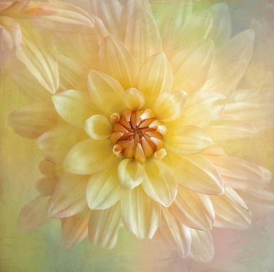 Kim Photograph - Dahlia Splash by Kim Hojnacki