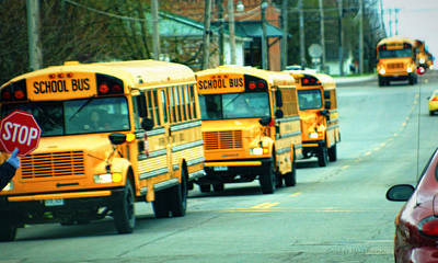 School Bus Photograph - Daily Parade by Cricket Hackmann