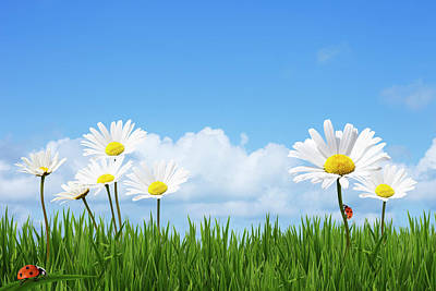 Daisies In A Summer Meadow Print by Andrew Dernie