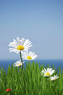 Daisies On A Cliff Edge Print by Andrew Dernie
