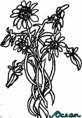 Drawing - Daisy Chain by Ocean Art