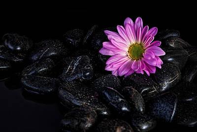 Droplet Photograph - Daisy On The Rocks by Tom Mc Nemar