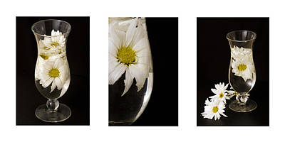 Daisy Triptych Original by Ayesha  Lakes