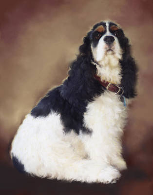 Cocker Spaniel Mixed Media - Dakota by Laurie Musser