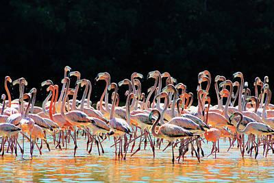 Caribbean Photograph - Dancing Flamingos by Renee Sullivan