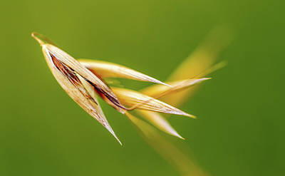 Porridge Photograph - Dancing Oats by Mah FineArt