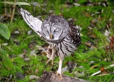 Dancing Owl Print by David Lee Thompson
