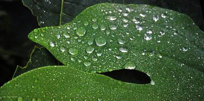 Photograph - Dancing Raindrops by Kay Lovingood