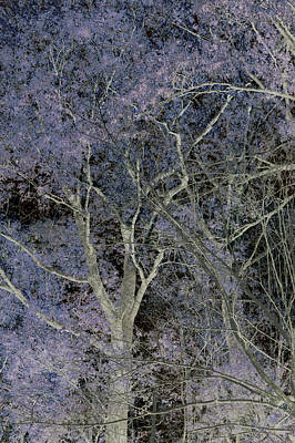 Abstract Photograph - Dancing Trees Lilac by Lesa Fine