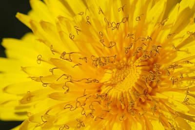 Dandelion Print by Jaroslaw Grudzinski