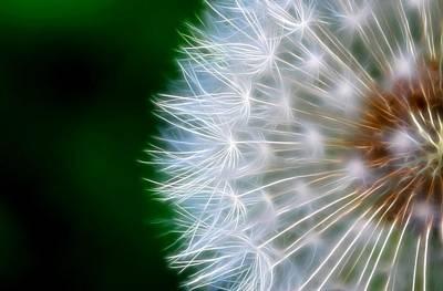 Dandelion Digital Art - Dandelion by Natidu Photography