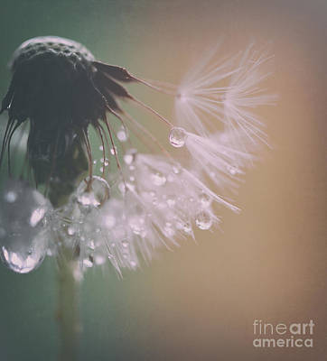 Dandelion With Pearls 3 Print by SK Pfphotography