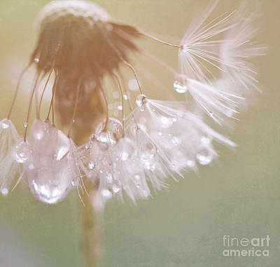 Dandelion With Pearls 5 Print by SK Pfphotography