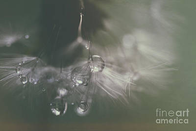 Dandelion With Pearls Print by SK Pfphotography